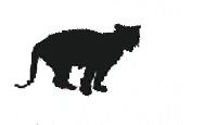 豹子<br><br>跳<br>高<br>600<br>cm<br>/<br>身<br>高<br>110<br>cm